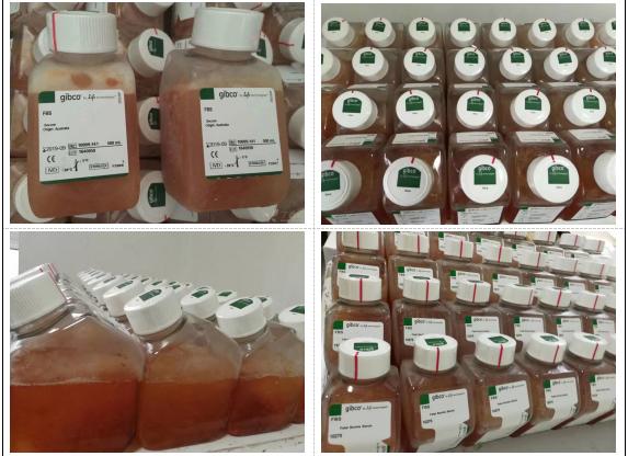Gibco新西兰胚胎干细胞专用胎牛血清16141079