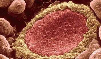 Annexin V-kFluor594细胞凋亡检测试剂盒(荧光显微镜专用)