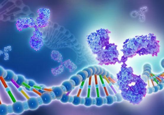 重组蛋白定制服务