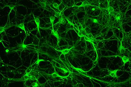 MDL-百奥思科细胞生物学实验