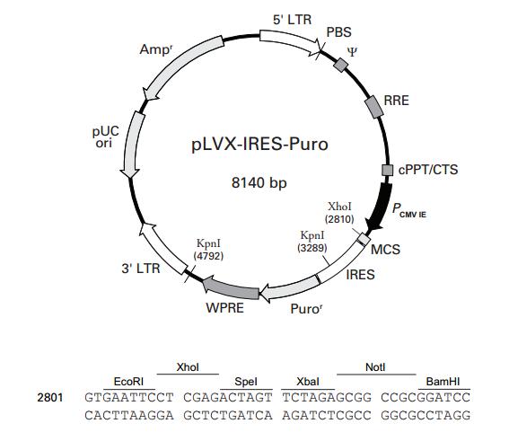 P0249 pLVX-IRES-Puro 质粒载体