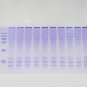 (原核)可溶蛋白表达服务