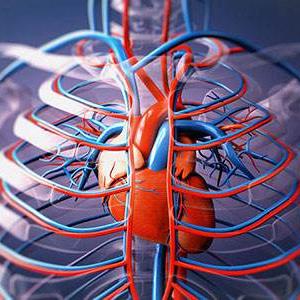 心血管类研究模型