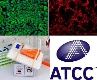 大鼠前列腺上皮细胞