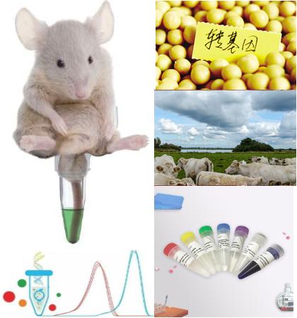 诺如病毒GⅡ型RNA核酸检测试剂盒(恒温荧光法)
