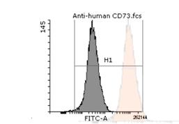 干细胞 | 细胞系流式检测