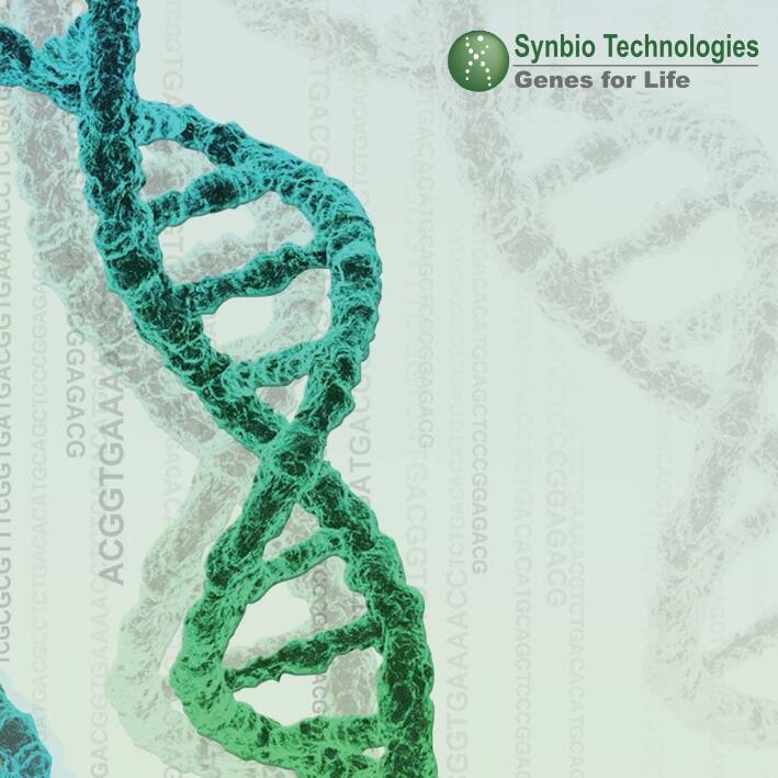 泓迅科技基因合成