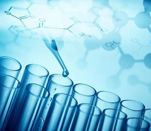 原代细胞制备与培养服务