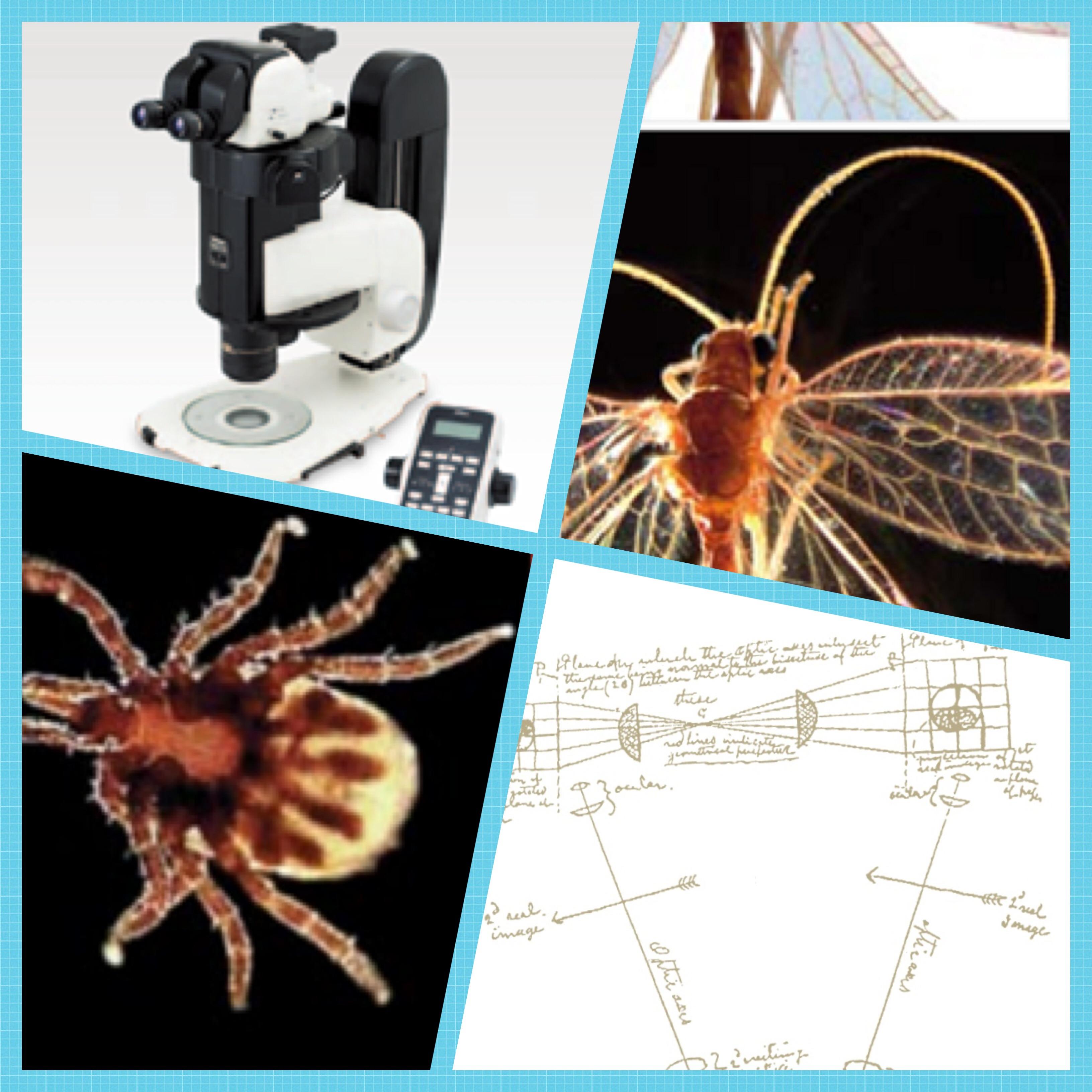 体视显微镜系列
