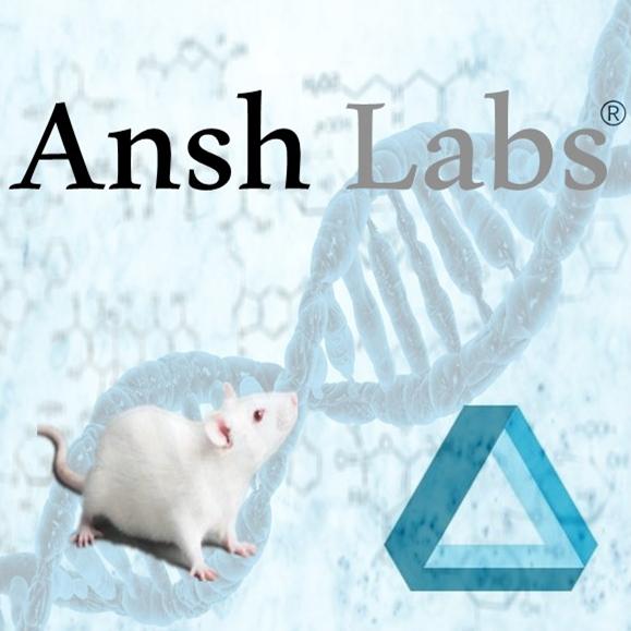 胰岛素生长因子结合蛋白 大鼠 Total IGF-I