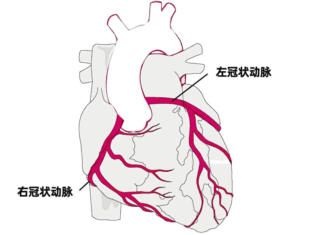 人冠状动脉平滑肌细胞 LONZA人原代细胞中国一级代理商北京泽平