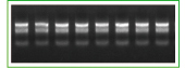5min极速RNA提取试剂盒