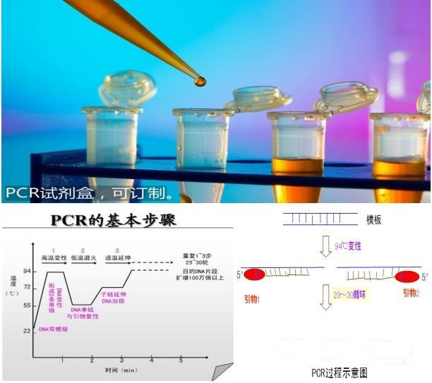 鸡伤寒沙门氏菌探针法荧光定量PCR试剂盒