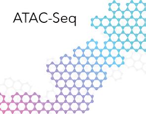 ATAC-Seq 技術服務