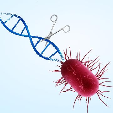 基因编辑细菌