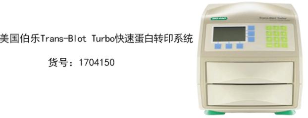 美国Bio-Rad伯乐 蛋白转印系统1704150