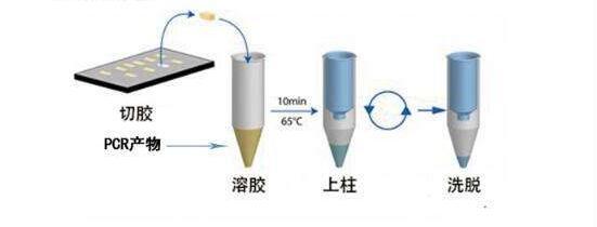 花椒LAMP鉴定试剂盒进口试剂