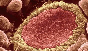 青链霉素混合液(100×)细胞培养专用价格