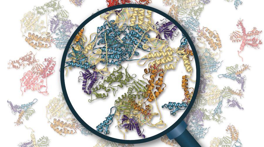 其他蛋白修饰分析实验技术服务