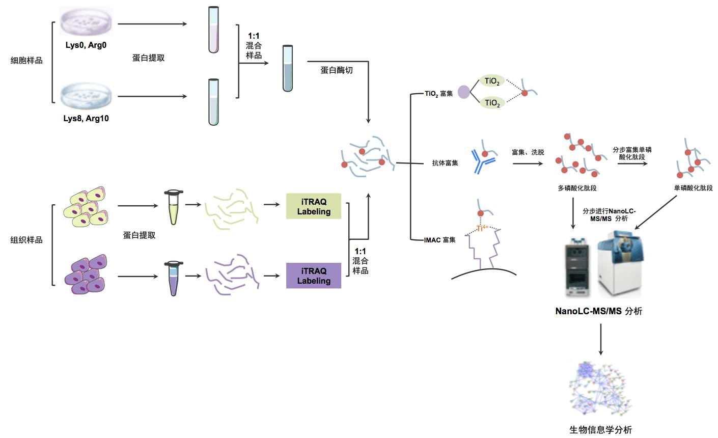 磷酸化修饰分析实验技术服务