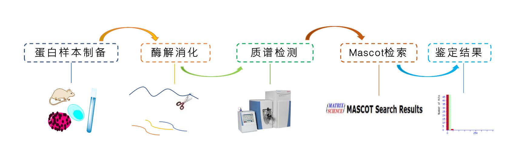 蛋白质全谱分析(Shotgun大规模蛋白质鉴定)