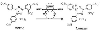 CCK-8/CCK-8/CCK-8细胞增殖与毒性检测