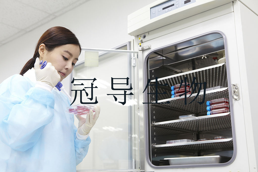 COLO 205細胞系;人結直腸腺癌傳代細胞