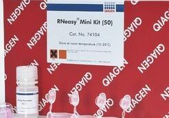 Qiagen 52904 病毒RNA小提试剂盒