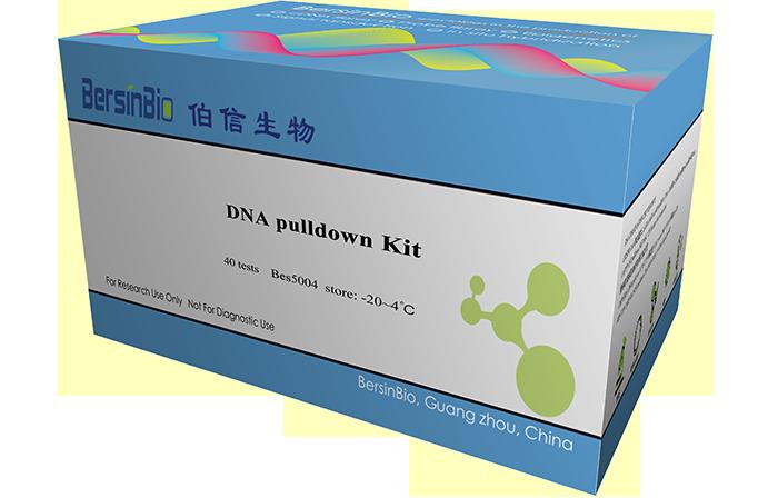 DNA pulldown试剂盒