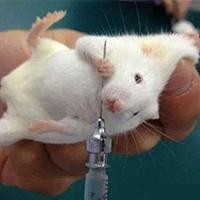 阿霉素诱导大鼠心肌病模型