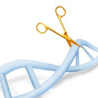 基因敲除细胞株