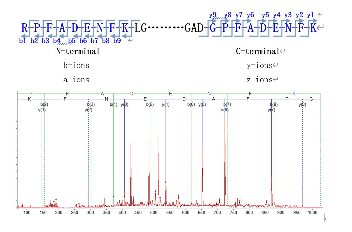蛋白质多肽,N端/C端测序