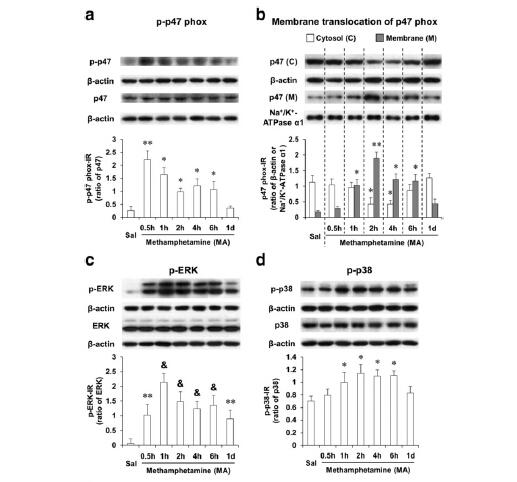 蛋白免疫印迹Western Blot(WB)技术服务(促销)