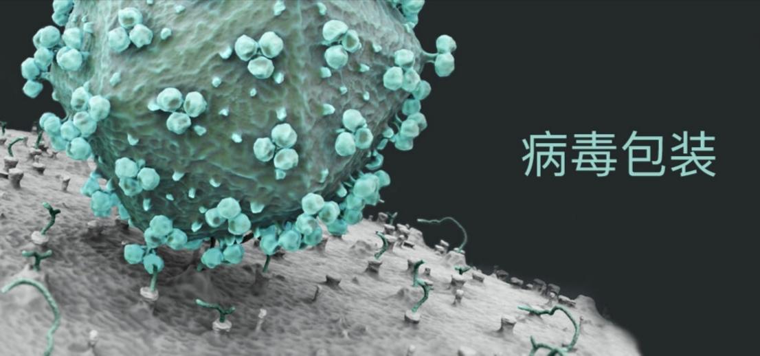 慢病毒包装
