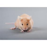 动物实验技术服务