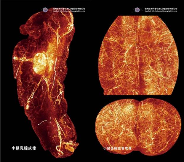 大组织器官整体3D荧光成像服务