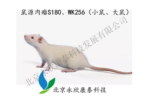 鼠源肉瘤S180、WK256模型(小鼠、大鼠)