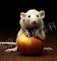 小鼠耳肿胀模型