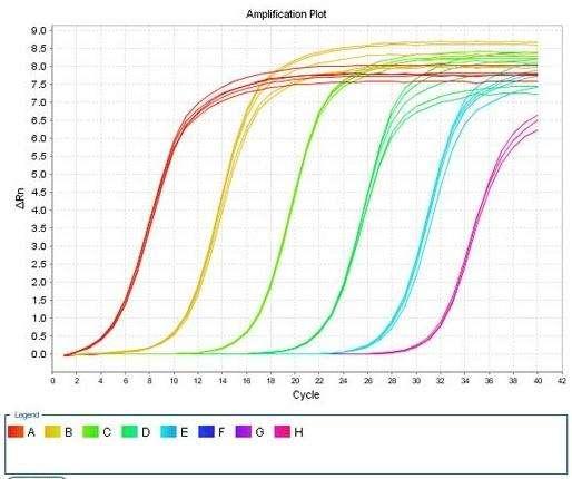 PCR引物设计——设计引物/探针,实验报告单、原始数据、扩增曲线、溶解曲线、数据分析结果等