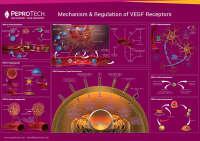 2020 VEGF受体的作用机制与调控.jpg