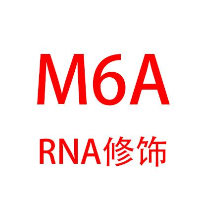 微量RNA甲基化测序(meRIP-seq)