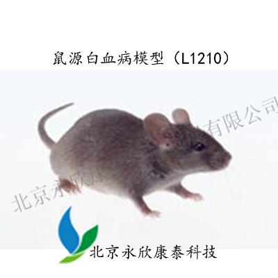 鼠源白血病模型(L1210)