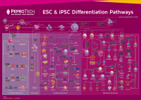 2020 ESC& iPSC挂图 PeproTech.png