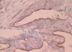 免疫组化、免疫荧光、HE染色、切片