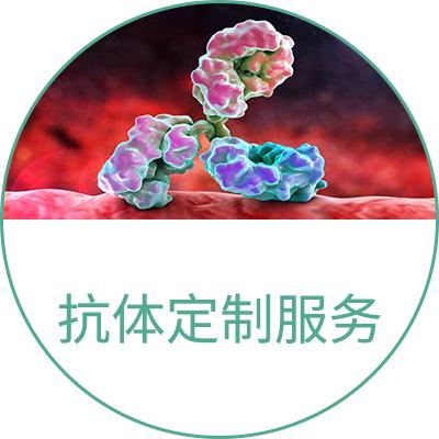 抗体定制服务
