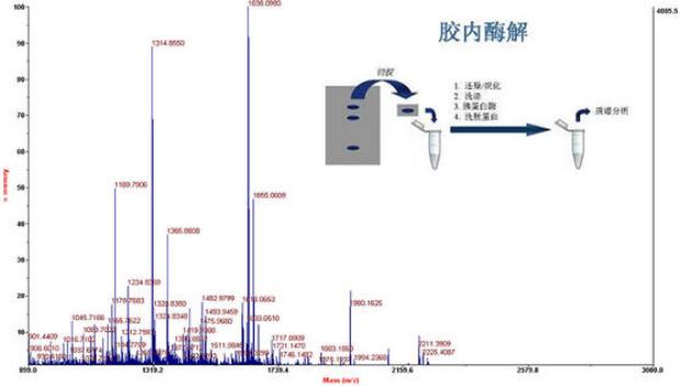 蛋白质质谱鉴定试验