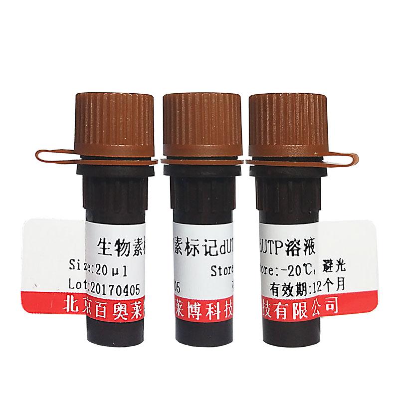 生物素化的Oligo(dT)北京供应商