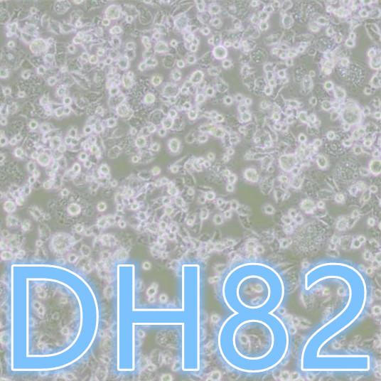 DH82细胞 / DH82犬巨噬细胞/狗肾恶性组织细胞增生症细胞