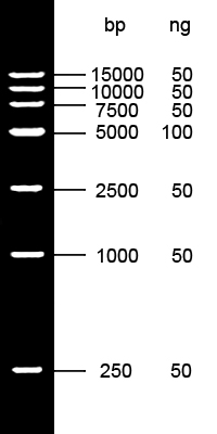 DL15000 Ladder
