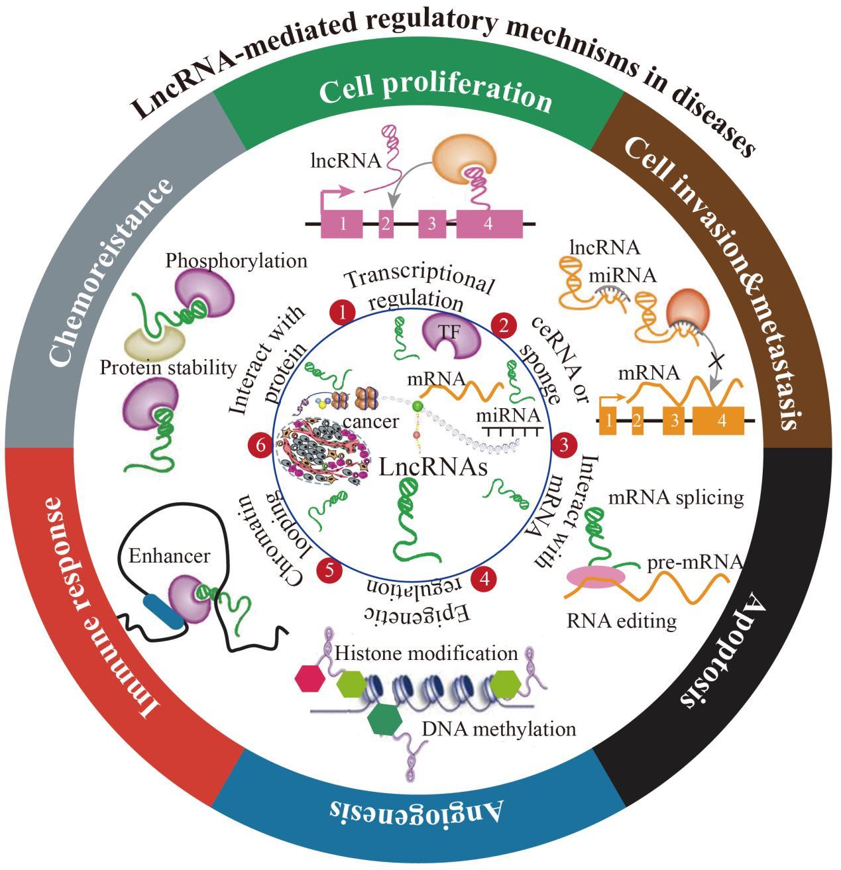 Human Cancer LncRNA PCR 芯片